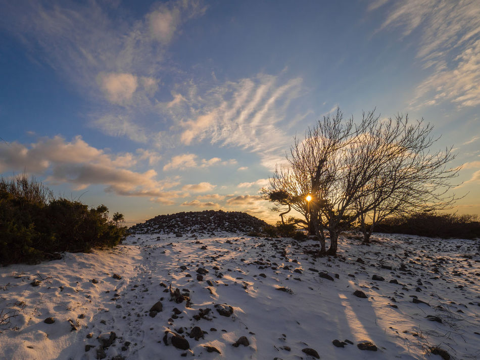 The lonelely tree in sunset by the stone grave, at Mølen otside the city of Larvik, in Norway Beach Beauty In Nature Cloud - Sky Landscape Lonely Tree Nature No People Outdoors Scenics Sky Stone Beach Stone Grave Sunset Sunset Sky Sunset Sky And Clouds Tree Tree Tree In Sunset