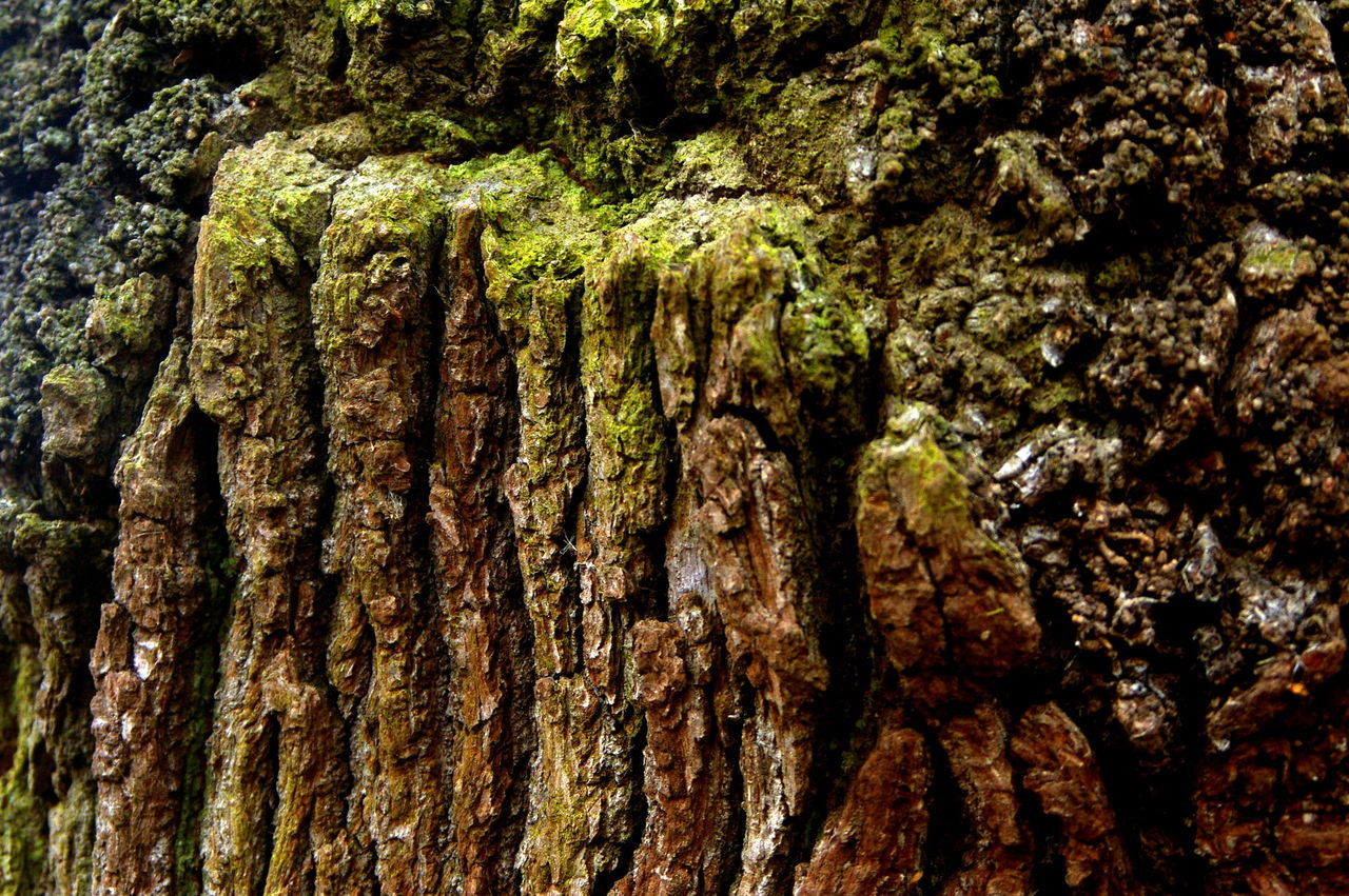 work Jan 2017 Beauty In Nature Day Full Frame Growth Nature No People Outdoors Textured  Tranquility Tree Tree Trunk
