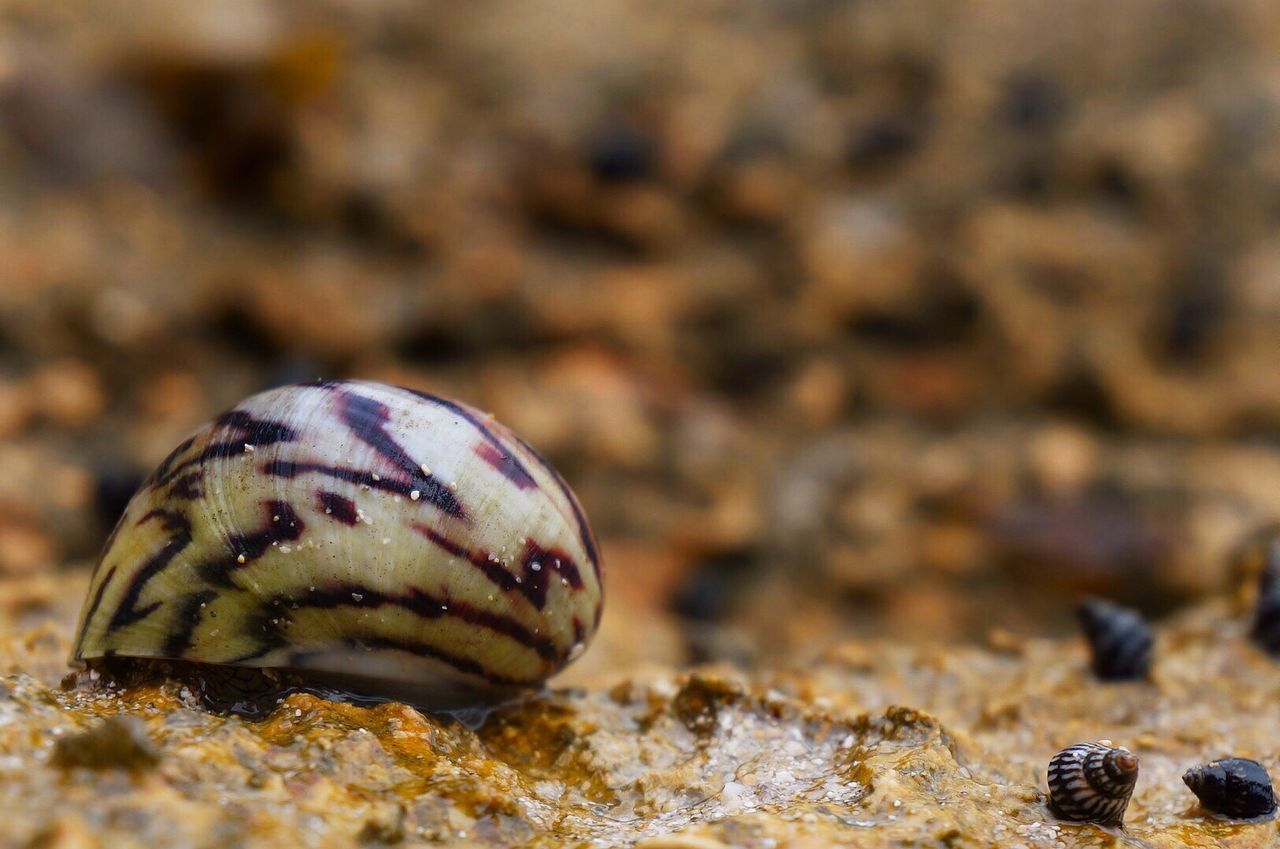 Snail Nature Nature_collection Nature Photography Snails Snail Shell Close-up Rocks Rocks And Water Beauty In Nature Beachphotography Beach Photography Beach Life 43 Golden Moments Focus On Foreground Selective Focus Details Detail Details Of Nature EyeEm Best Shots - Nature From My Point Of View Eye For Detail Eye For Photography Bokeh Love Bokeh