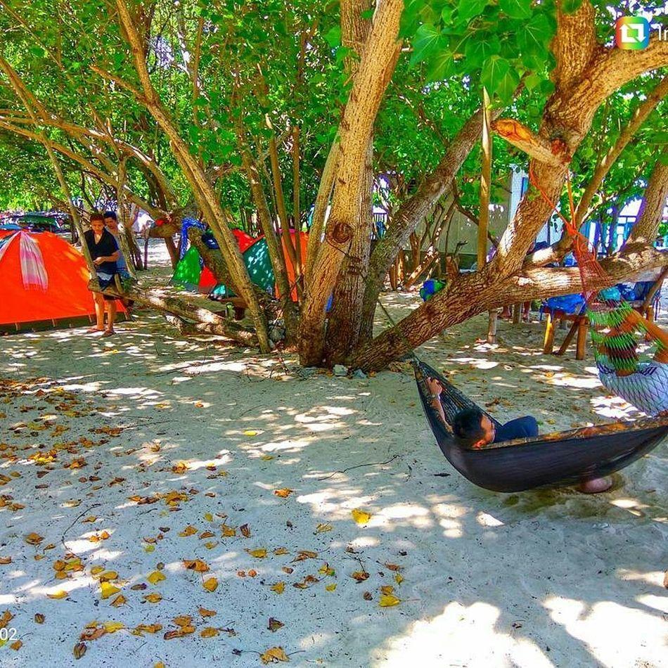 Glamping 😊💟👍 Byahenitinoki Wheelstravel Camping Glamping Hammock Beach Aporeef Tent Wanderlust Tree