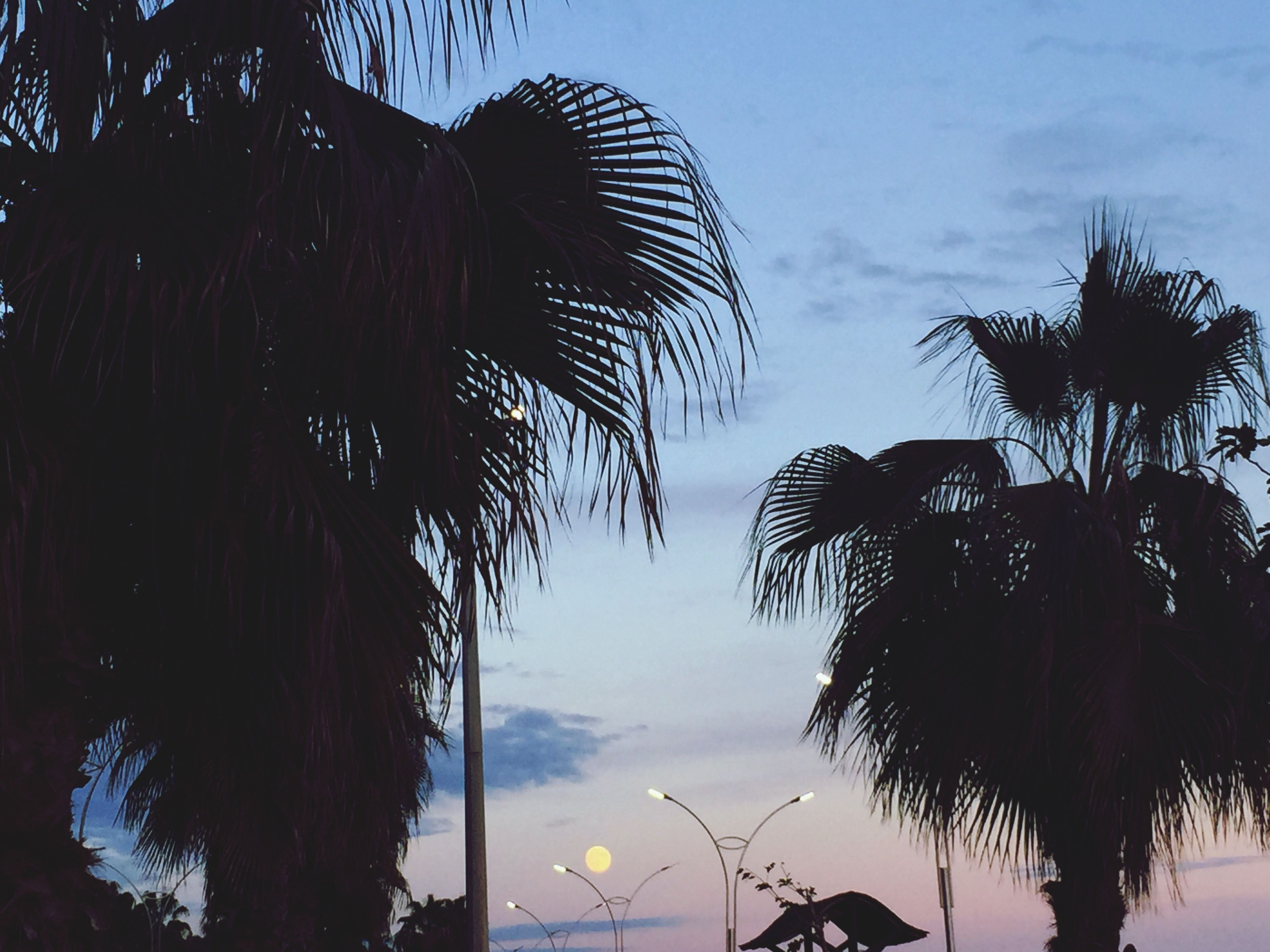 palm tree, low angle view, sky, tree, silhouette, sunset, cloud - sky, growth, tranquility, nature, beauty in nature, dusk, cloud, scenics, palm leaf, coconut palm tree, tranquil scene, tall - high, outdoors, tree trunk