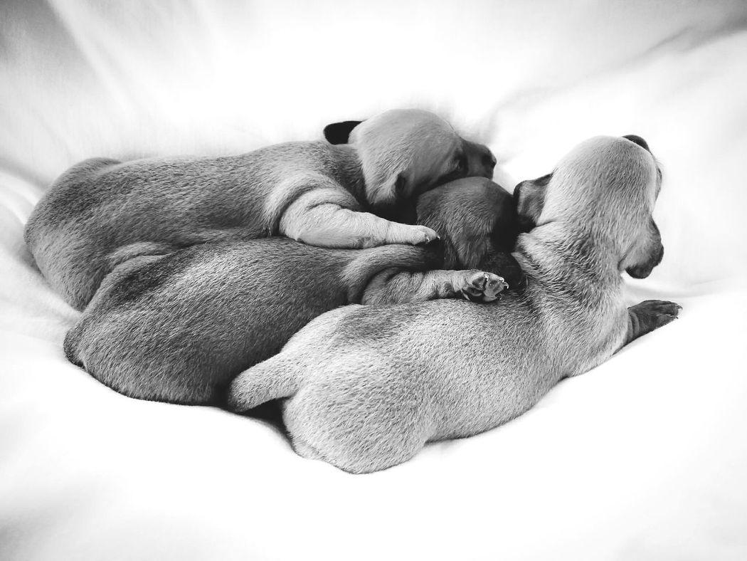Teckel Dog Pets Domestic Animals City Blackandwhite Photography Nature Baby