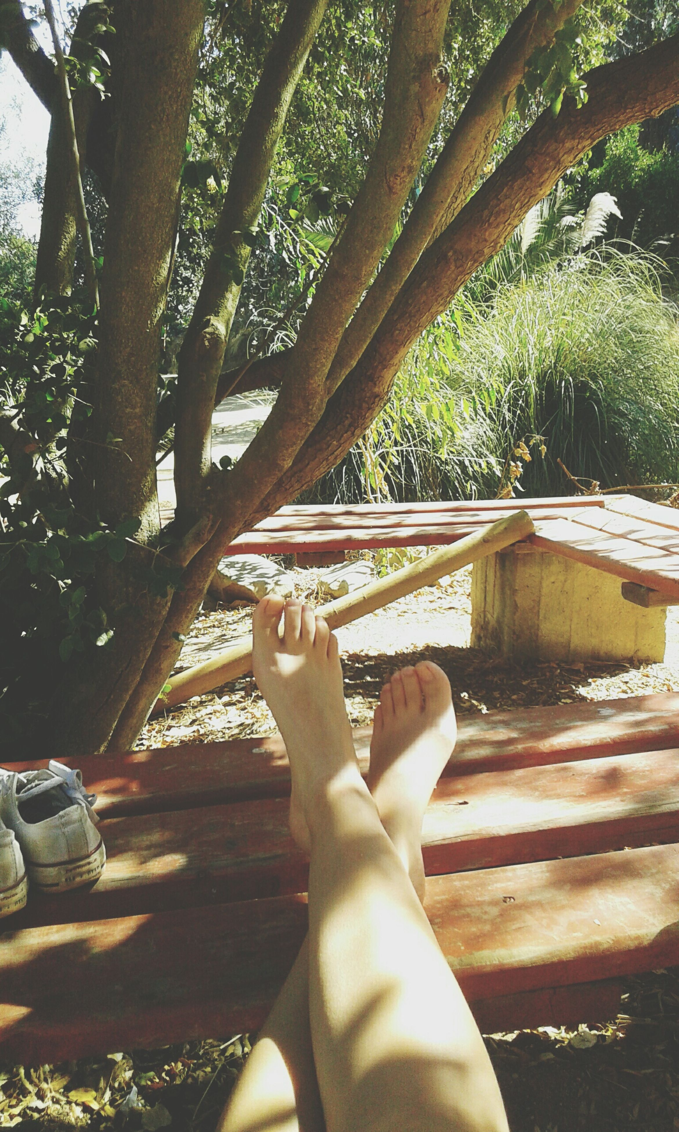 low section, person, personal perspective, tree, lifestyles, relaxation, leisure activity, human foot, barefoot, legs crossed at ankle, sitting, sunlight, resting, part of, relaxing, day