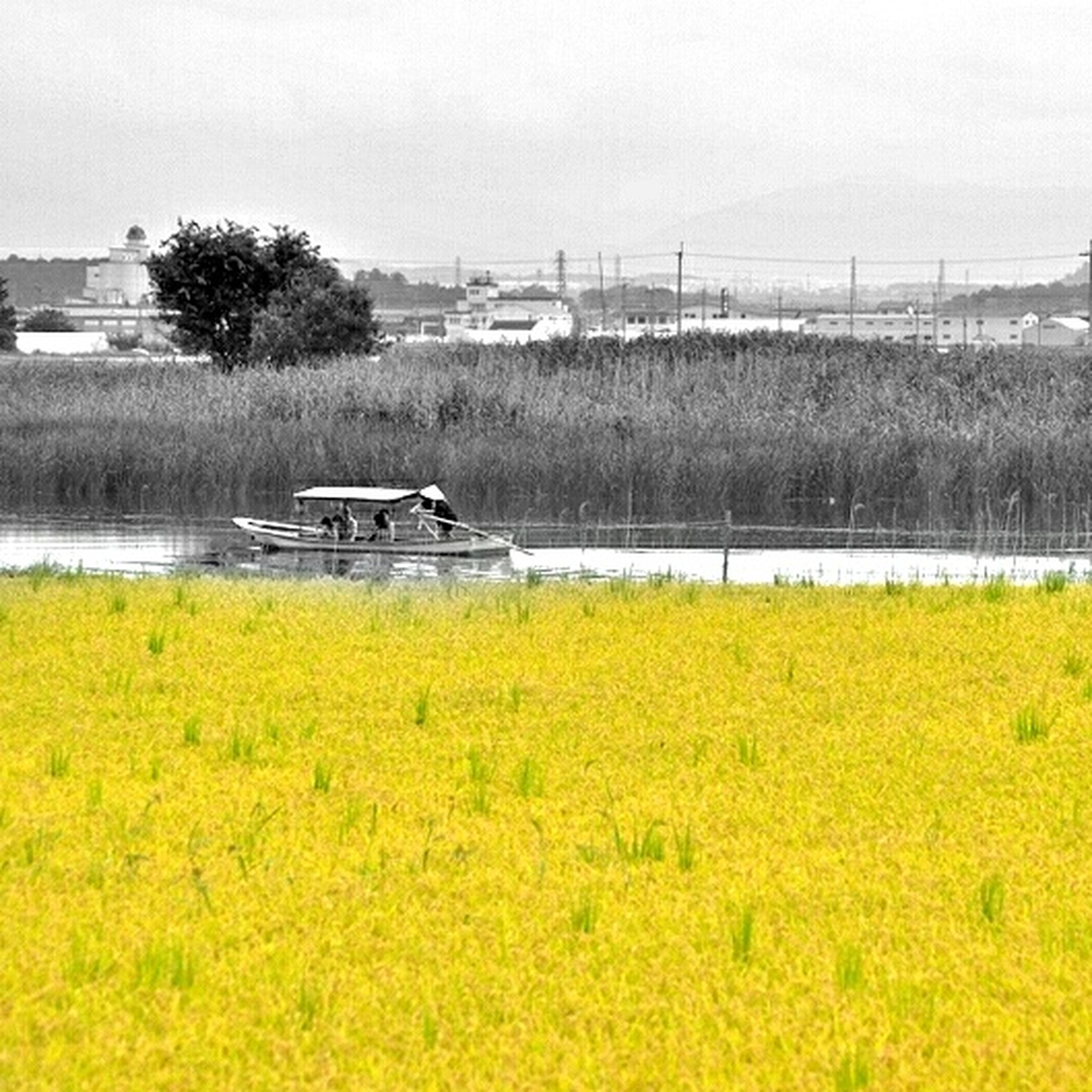 transportation, field, grass, sky, mode of transport, tranquil scene, water, landscape, nature, tranquility, growth, rural scene, beauty in nature, plant, yellow, tree, scenics, agriculture, green color, river