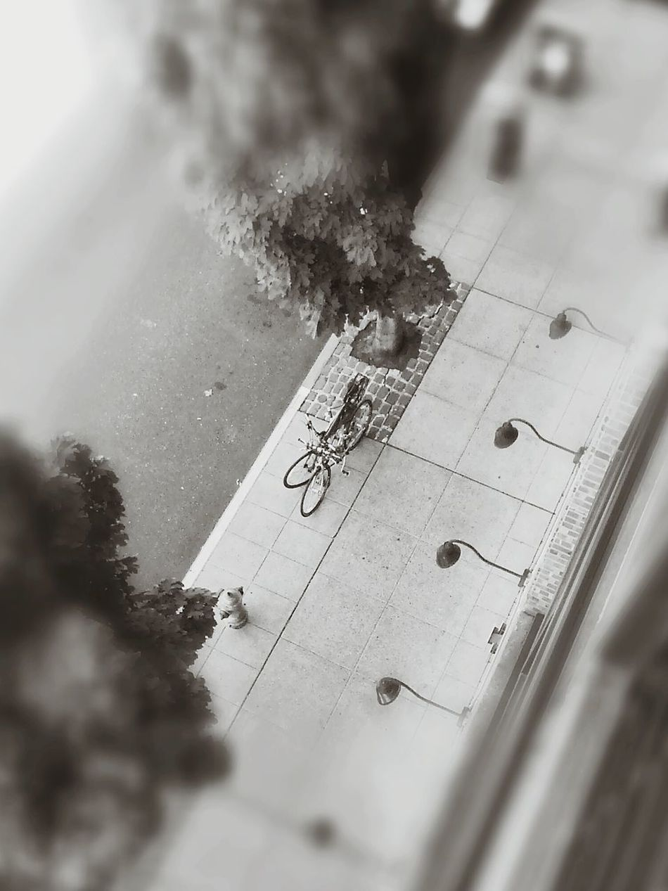 bicycles and shadows Black And White Svartvitt Black And White Photography Schwarzweiß Shades Of Grey Shadows Schatten Portland Downshot Fast Through A Slow-motion Landscape