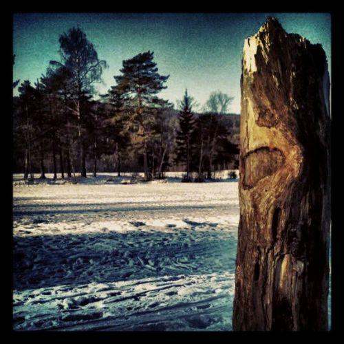 Oslo Sognsvann Tree Snow