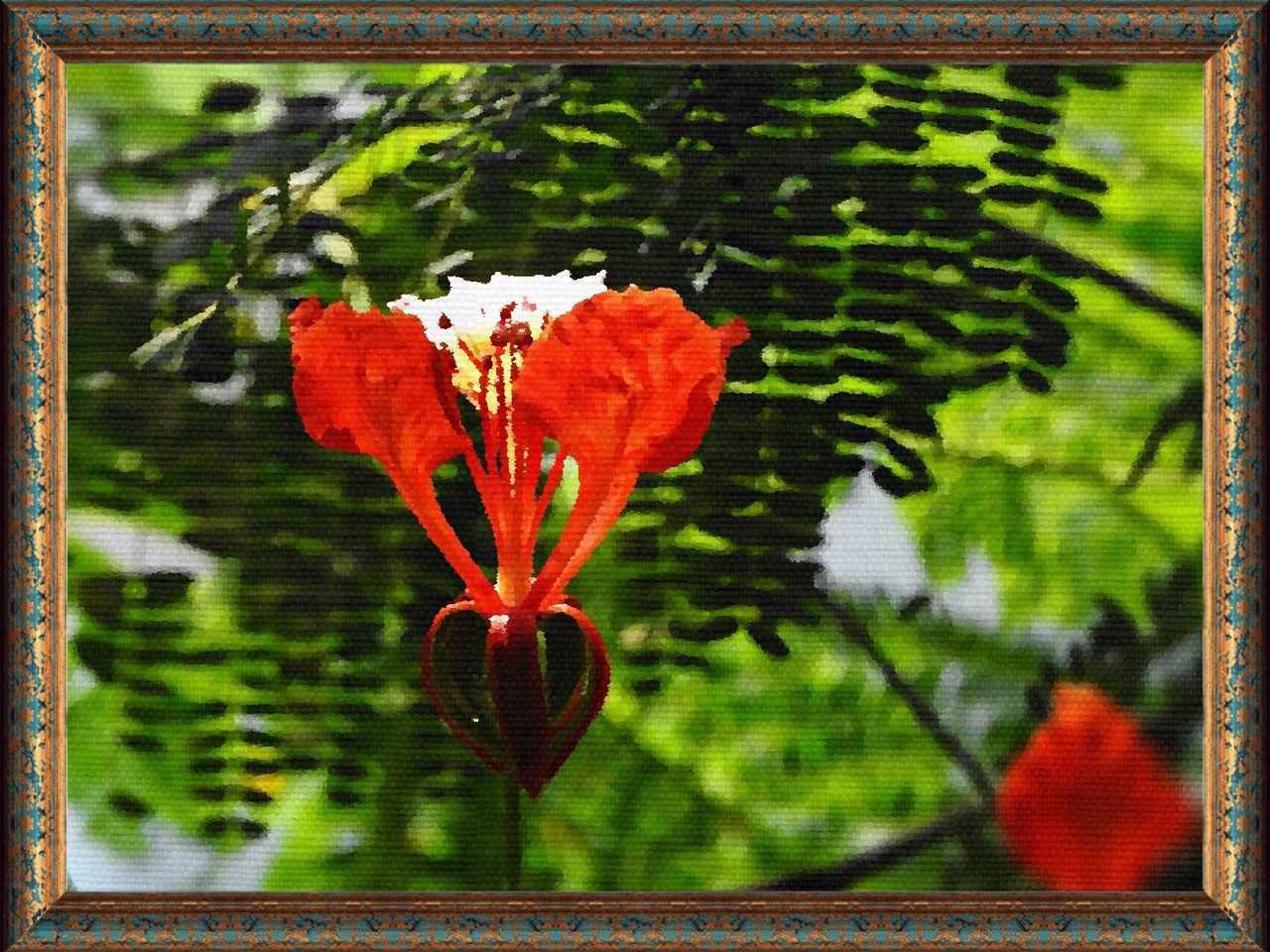 growth, plant, flower, nature, fragility, freshness, day, outdoors, no people, petal, beauty in nature, focus on foreground, leaf, close-up, blooming, red, flower head