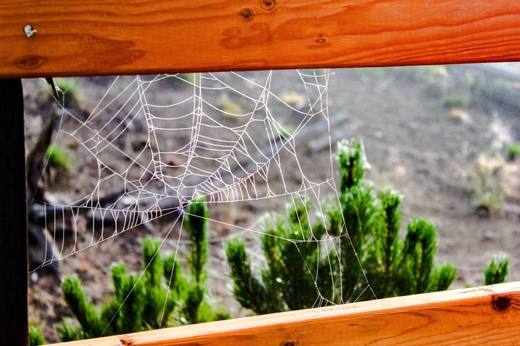 Under construction... Spiderweb EyeEm Nature Lover Lines Natural Geometry Perspectives Nature Deceptively Simple Wood Trees Spider Web