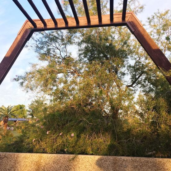 Tree Built Structure Tree Architecture Day Building Exterior No People Low Angle View Sky Growth Nature Plant Outdoors