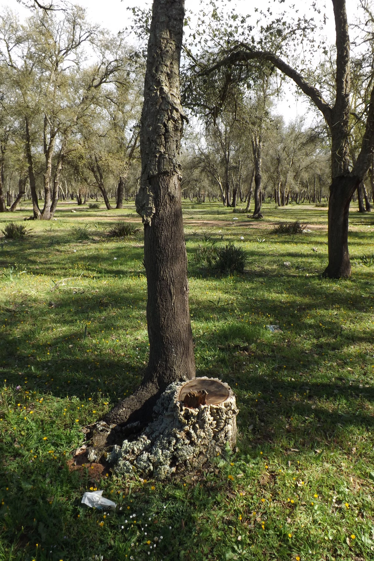 Arbres Beauty In Nature Day Environment Foret Grass Growth Herbre Landscape Nature No People Outdoors Paysage Scenics Sky Tranquil Scene Tranquility Tree Tree Trunk