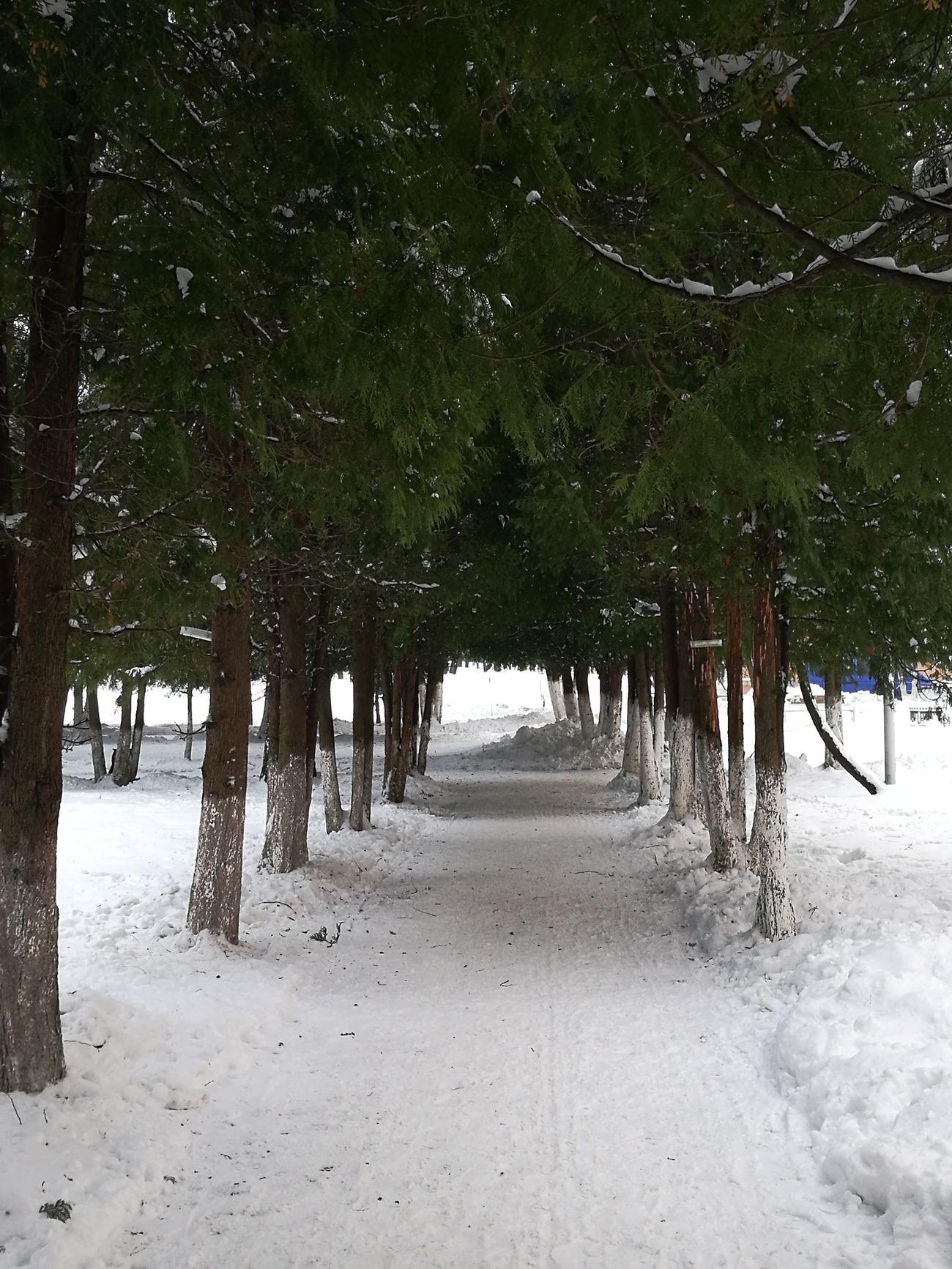 Tree Nature No People Snow ❄ зима Ice Snow Minsk утро Winter Morning