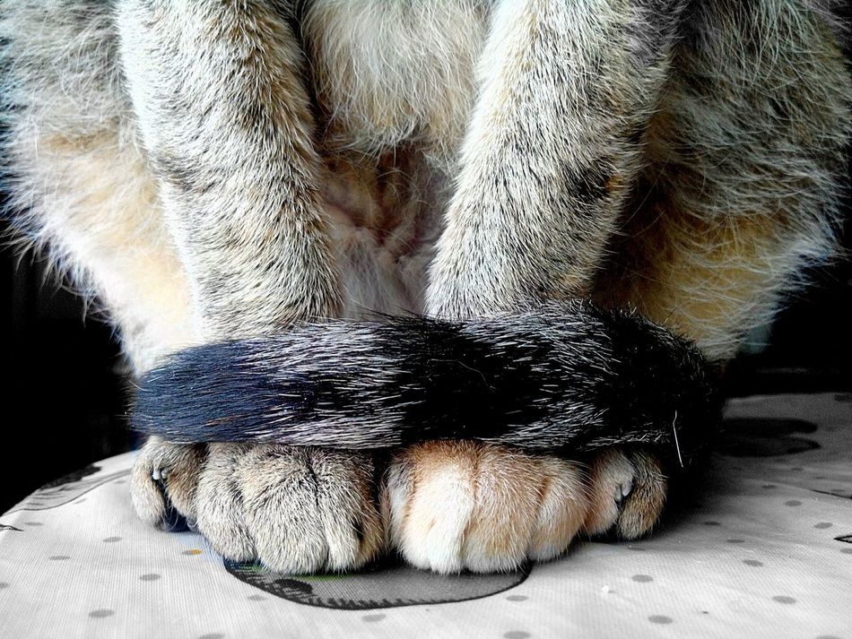 Beautiful stock photos of cat, Animal Themes, Close-Up, Domestic Animals, Indoors
