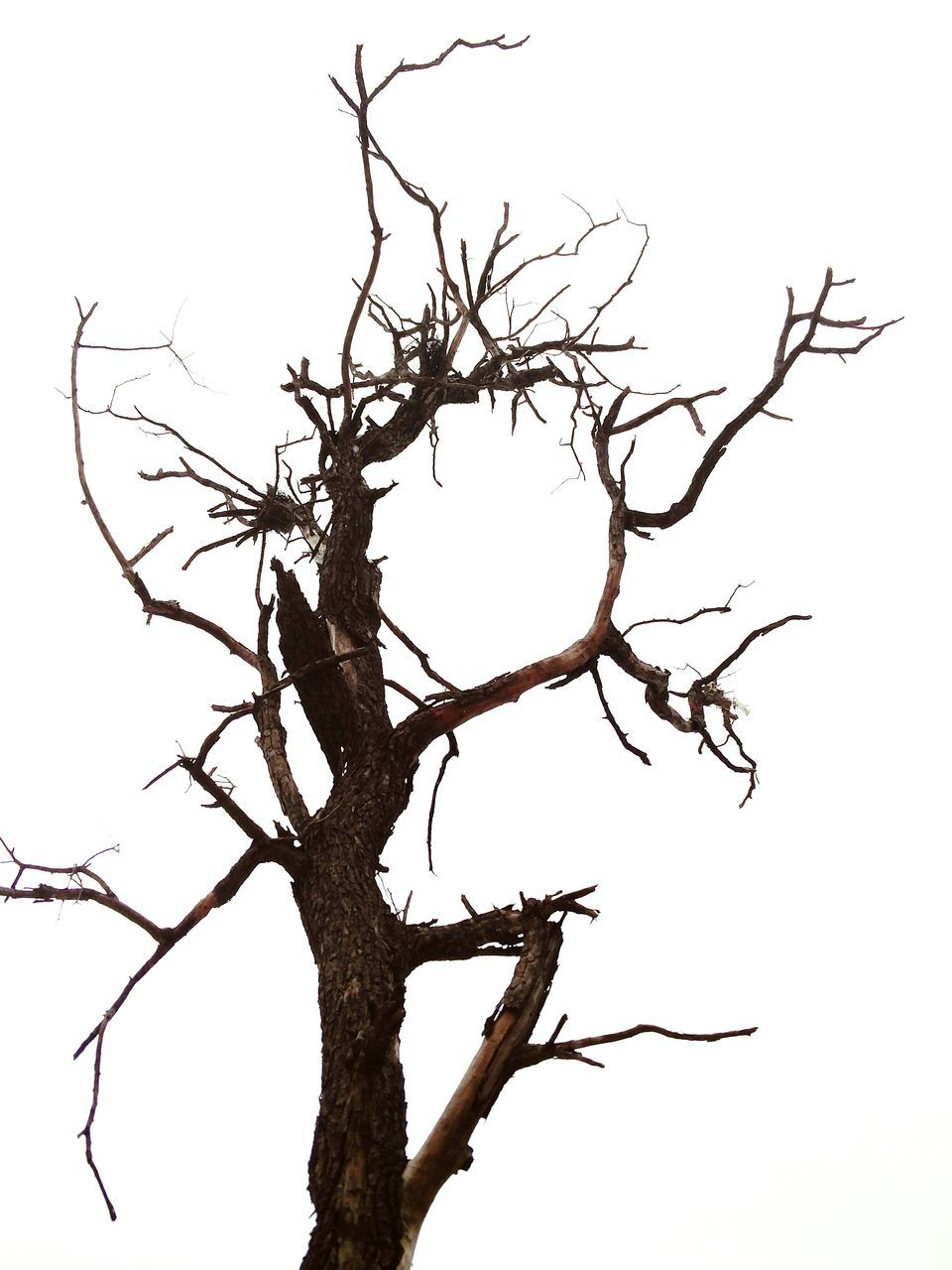 bare tree, branch, tree, low angle view, dead plant, dead tree, nature, dried plant, clear sky, no people, outdoors, tree trunk, lone, beauty in nature, day, sky