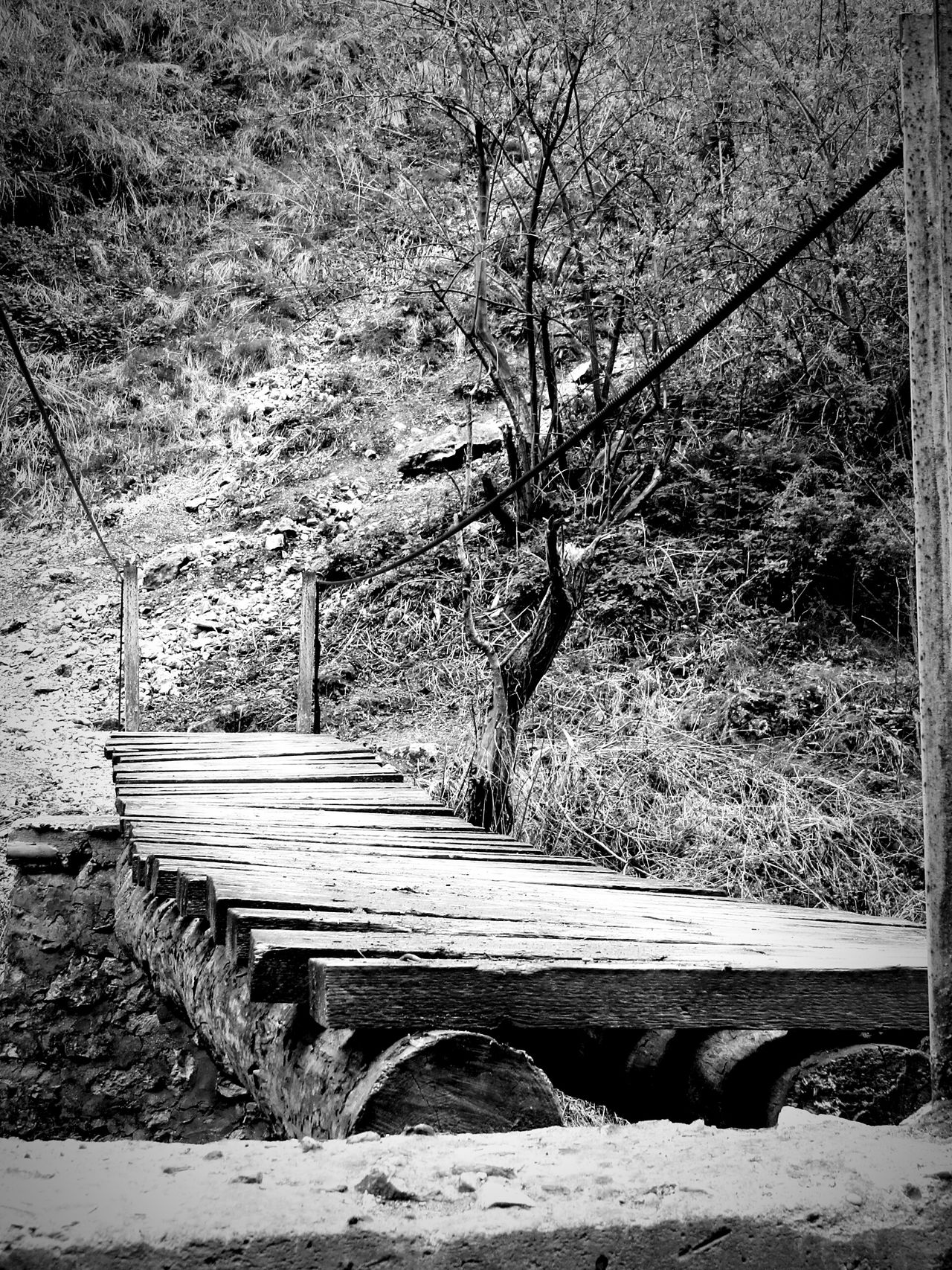 Outdoors No People Grass Nature Bridge Dangerous Letsgo Followme Old Forest Photography Nature Nature Photography Eyeemphotography Quiet Moments Eye4photography  Fine Art Photography Blackandwhite Scary Places Trip From My Point Of View Riverside Todayphotography Eye4photography  Growth Tree Trunk TCPM Break The Mold