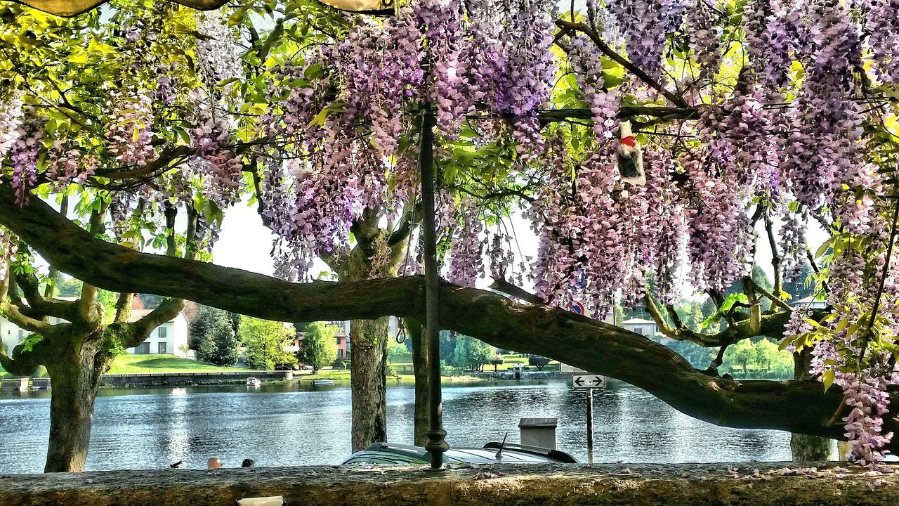 tree, growth, branch, nature, beauty in nature, blossom, flower, springtime, lake, no people, day, fragility, freshness, water, outdoors, tranquility, low angle view, scenics, sky