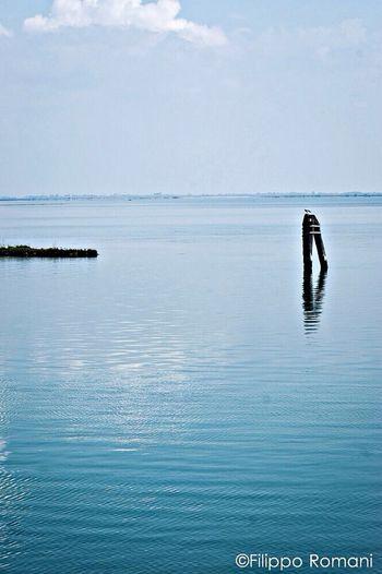 Venice EyeEm Best Shots Getting Inspired Wilde Nature