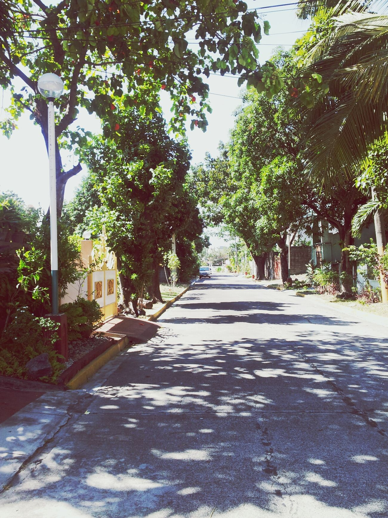 Ally's street