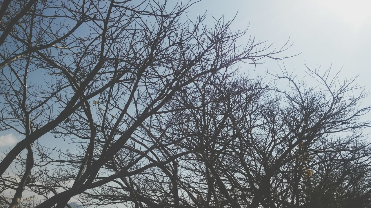 bare tree, tree, branch, low angle view, nature, no people, beauty in nature, tranquility, outdoors, day, sky