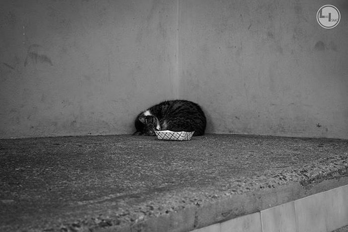 """Kitty corner..."" Likeisaac Moodygrams Agameoftones Attacktheshot Way2ill Createcommune Heatercentral Illgrammers Fatalframes Way2ill Reflectiongram Nyc_primeshot Nj Njphotographer Njphotography Newjersey VSCO Vscocam Njshooterz Jerseycollective"