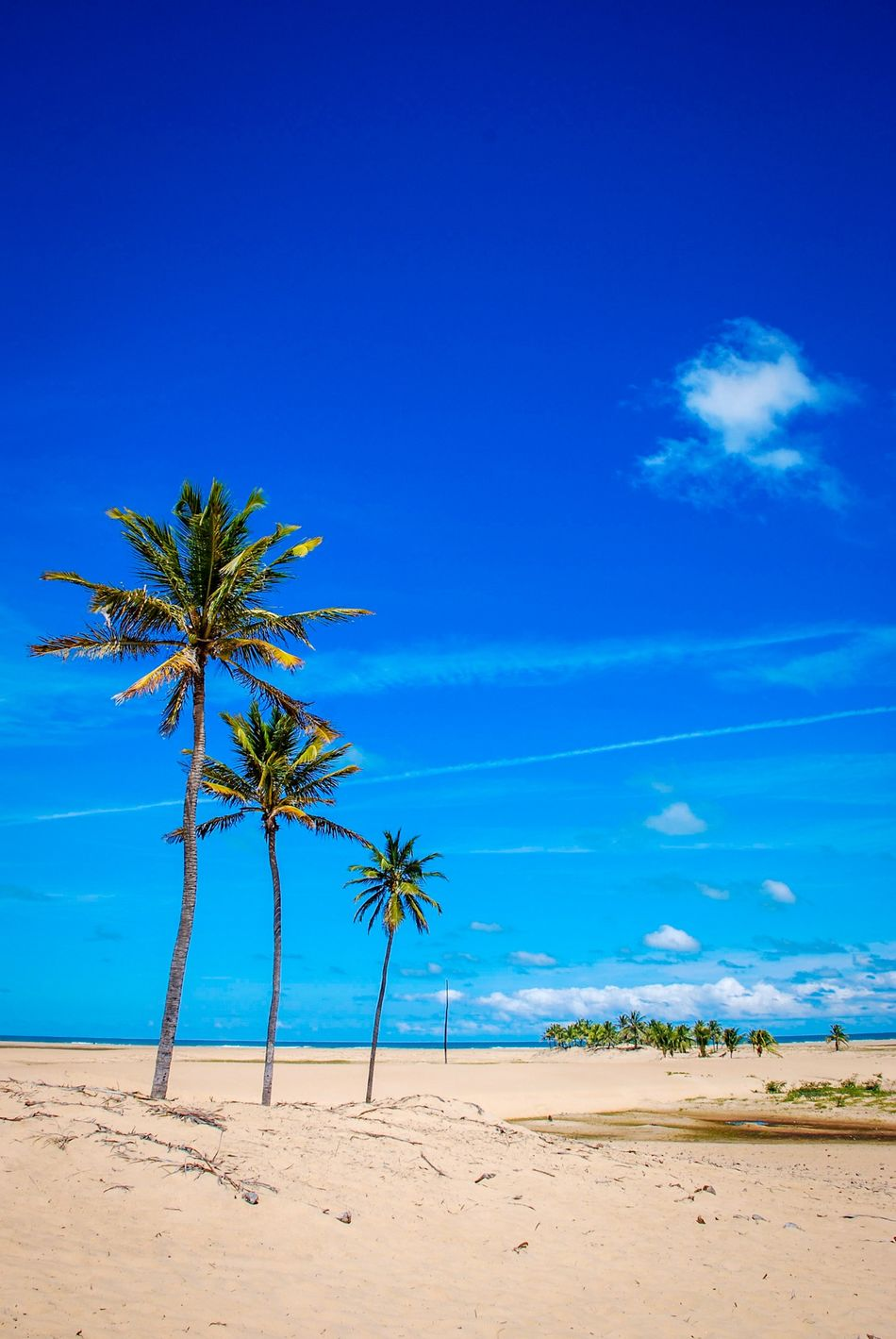 Palm Trees Sand Rio Sao Francisco Foz Ocean Blue Sky Piaçabuçú Alagoas Brazil