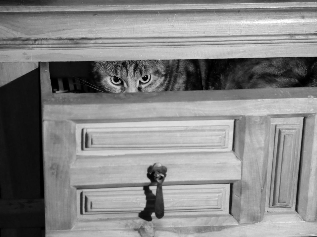 Beautiful stock photos of black & white,  Cabinet,  Domestic Animals,  Drawer,  Feline