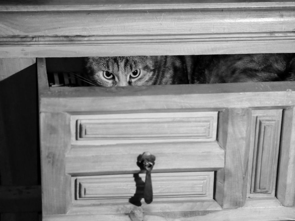 Beautiful stock photos of black & white,  Cabinet,  Domestic Animals,  Drawer,  Feline
