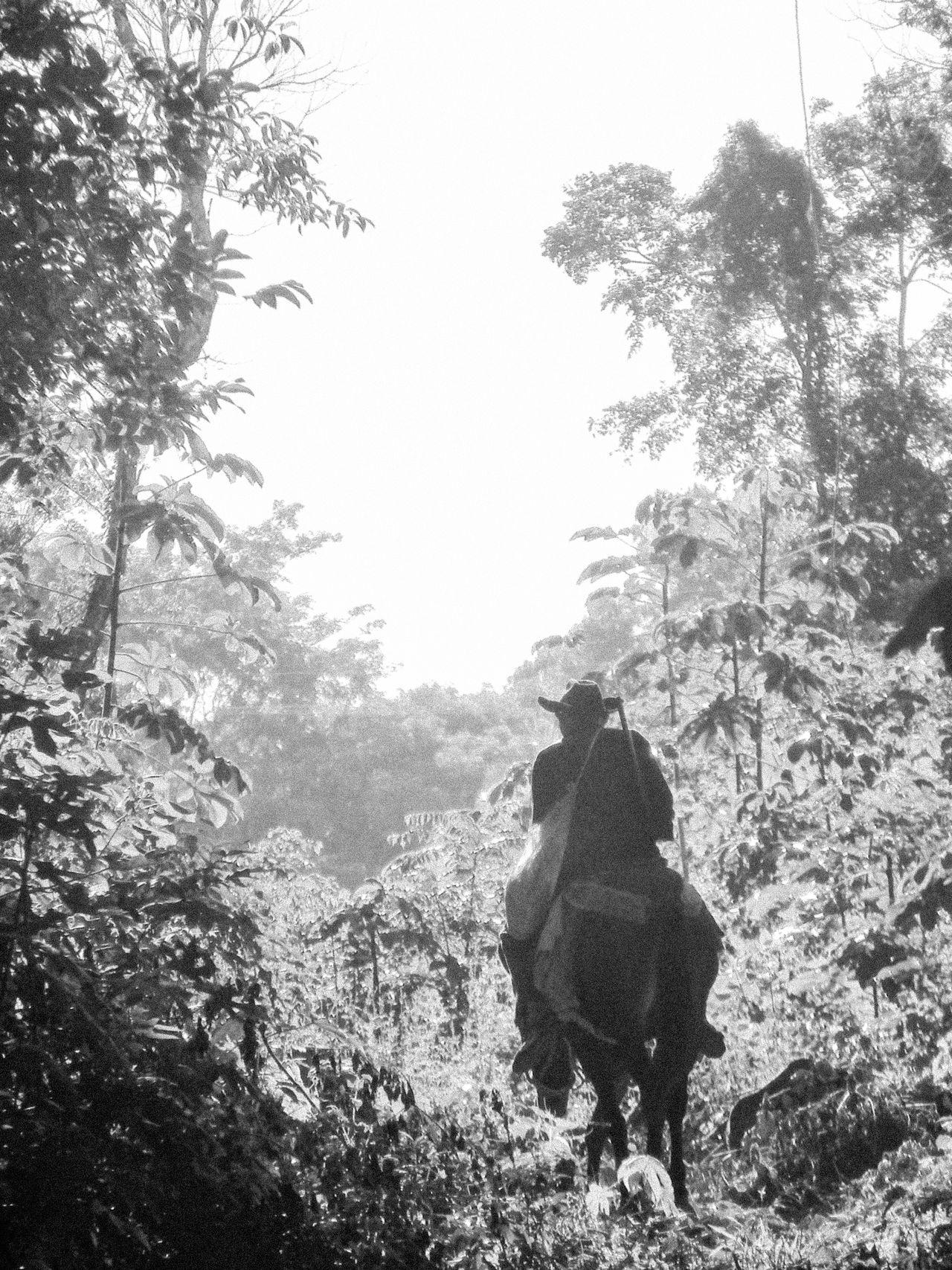 Black And White Day Forest Forest Trail Horse Lone Rider Man On Horseback Non-urban Scene Rainforest Remote Solitude Tropical Rainforest Yucatan Mexico Yucatan Peninsula Yúcatan Hunter