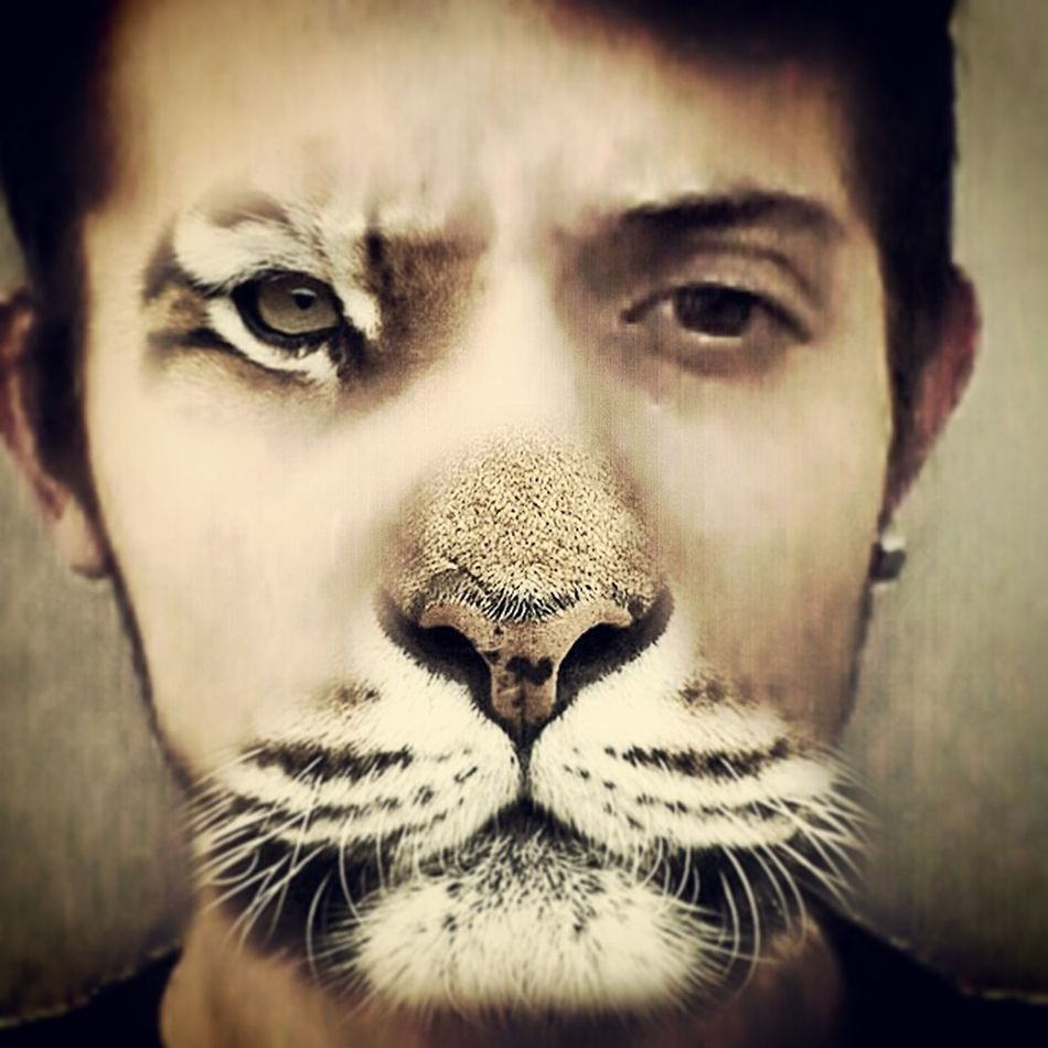 Like Follow4follow Tigerman Verygood