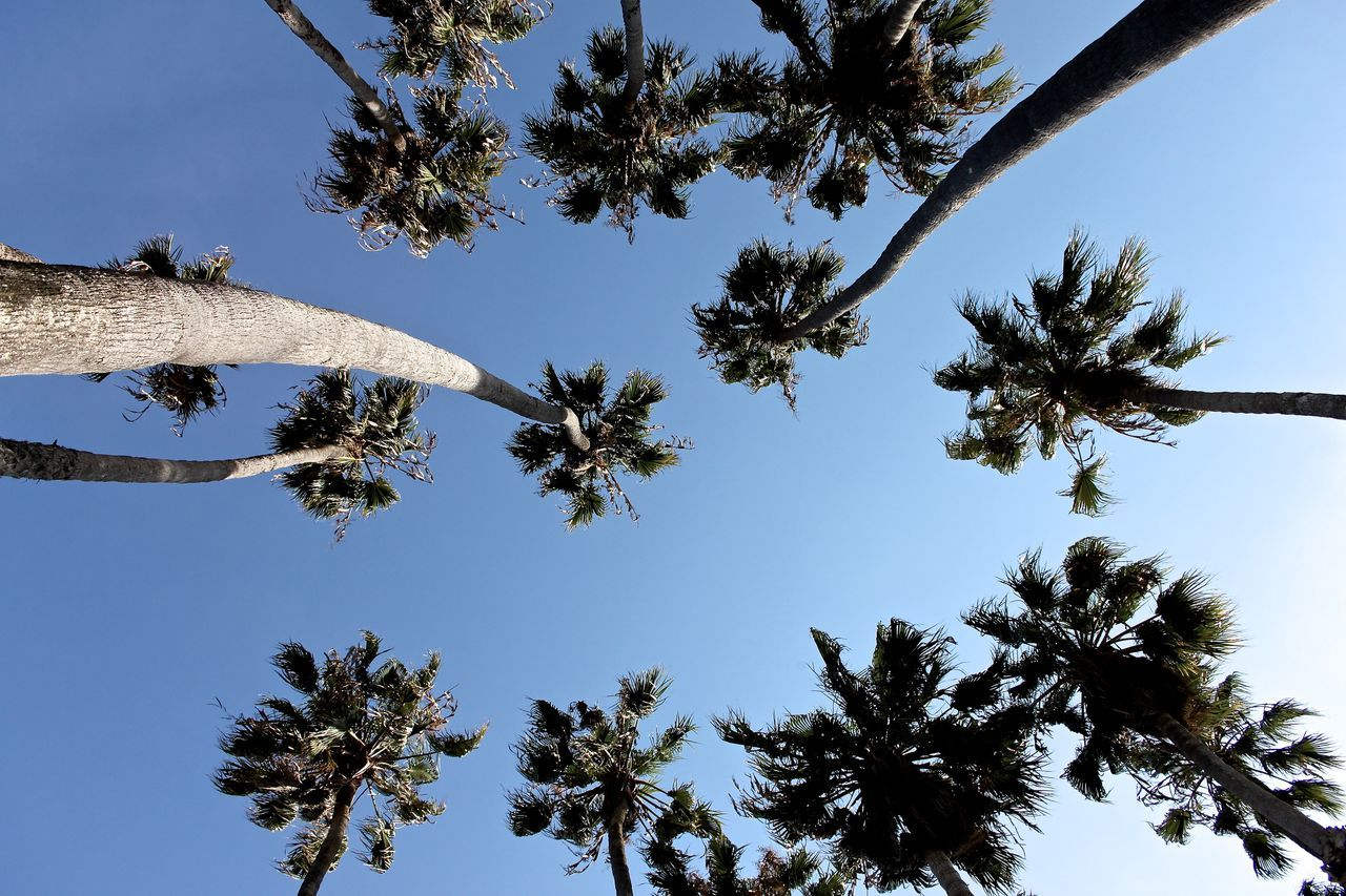 Directly Below Shot Of Palm Trees Against Sky