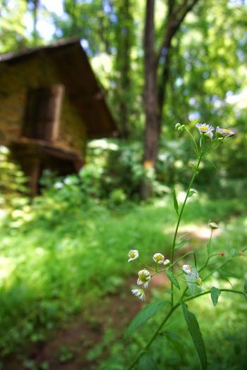 Sometimes it's the little things that catch your eye. Flowers Hiking Rural Decay Beauty In Decay