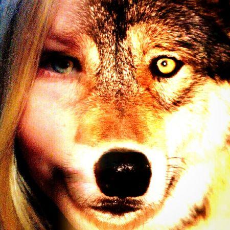 wolfsmädchen Tier-mädchen Tiere Tierisch