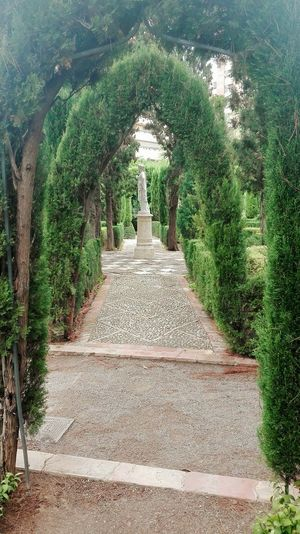 The Way Forward Green Color Day Growth Tree Outdoors Nature Esculture Laberinto Camino Sentido