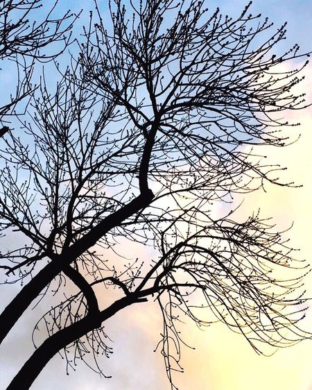 Bare Tree Beauty In Nature Nature Tranquility Tranquil Scene Sky Outdoors Majestic First Eyeem Photo
