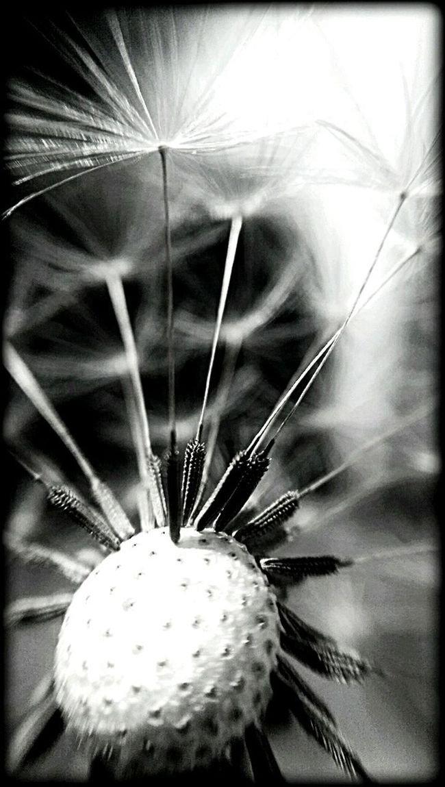just pure Macro_collection Flowerporn Macro_flower Blackandwhite Photography