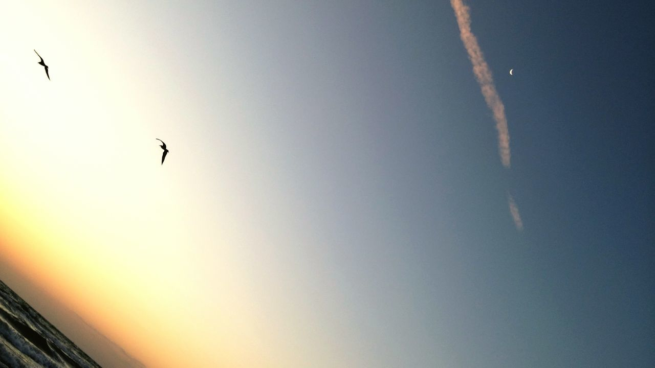 flying, bird, animals in the wild, animal themes, low angle view, mid-air, one animal, no people, clear sky, outdoors, nature, animal wildlife, day, sky, sunset, beauty in nature