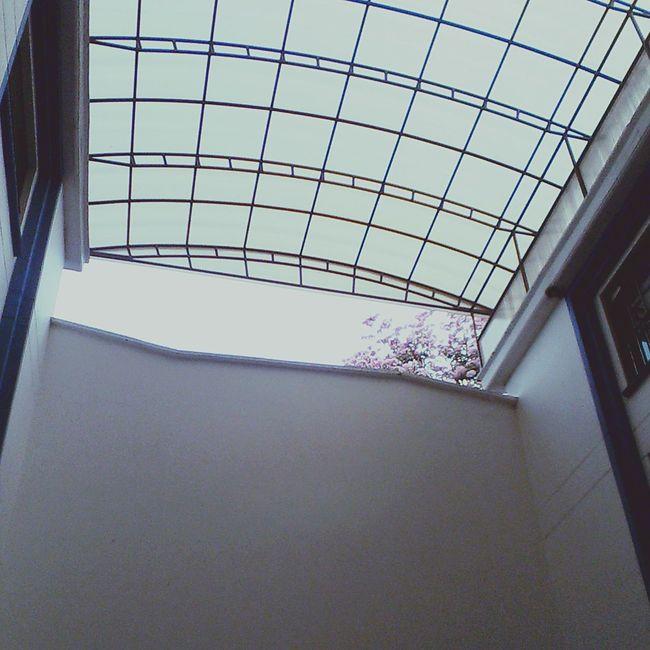 Studying Rain Hoy Skycollection