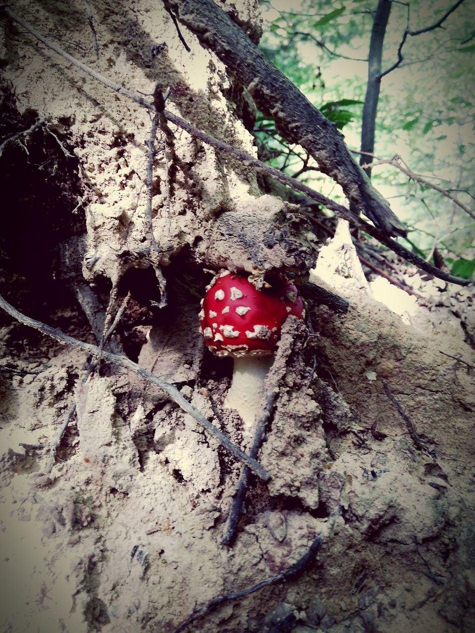 Nature Outdoors Shroom Red