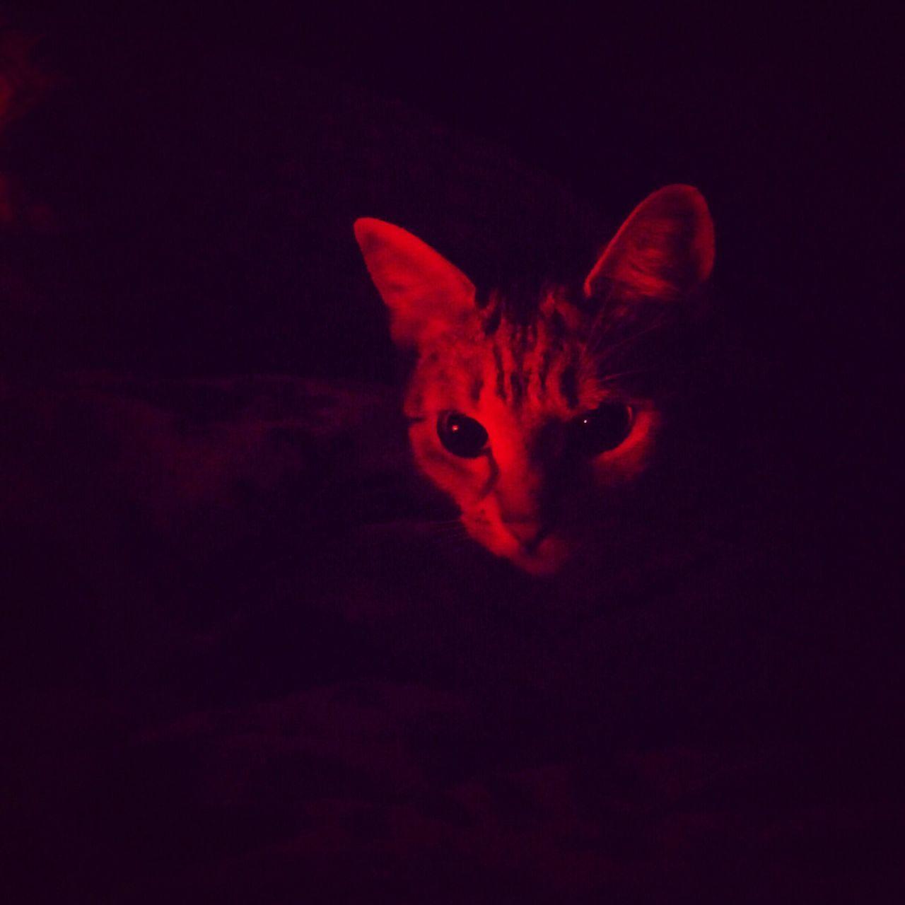 Rosie in the glow of the saltlamp Little Tiger Cats Of EyeEm Glowing Kitten Saltlamp Tabby Tabbycats Rosie