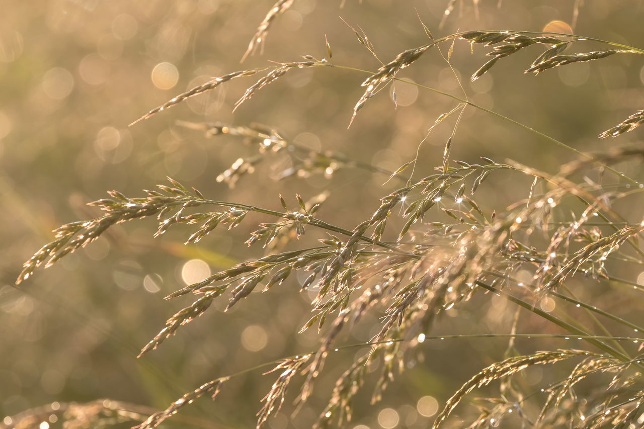 nature, plant, growth, outdoors, beauty in nature, no people, day, fragility, grass, close-up, branch, freshness