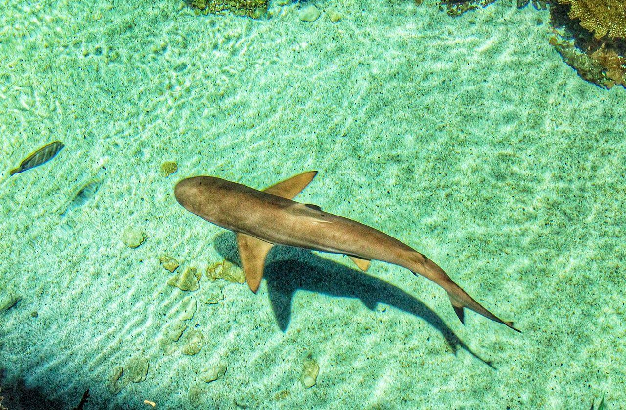Beautiful stock photos of shark, Animal Themes, Animals In The Wild, Aquarium, Aquatic