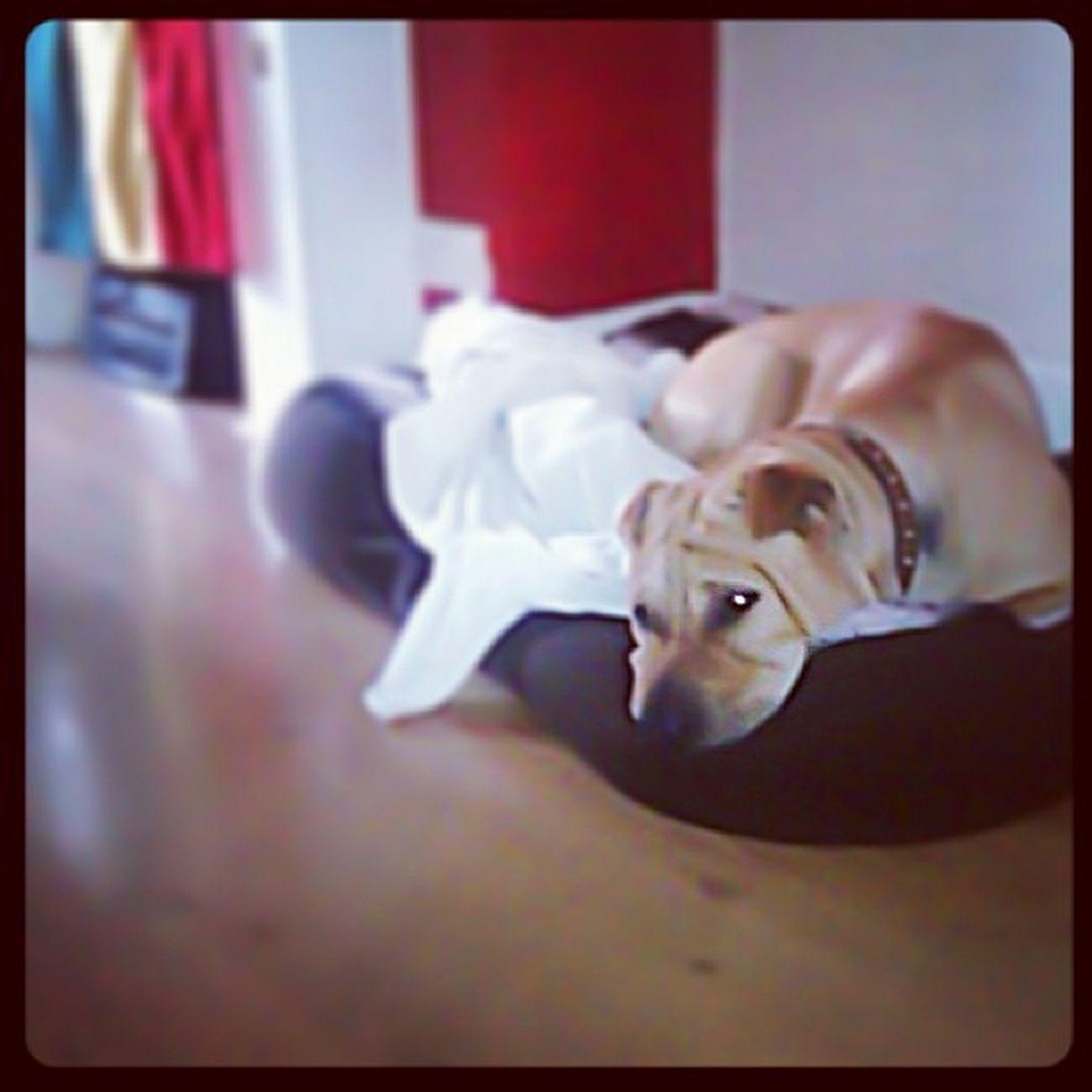 Mans Best  Friend . Sharpei Dog Pet Flag Ghana Accra Africa