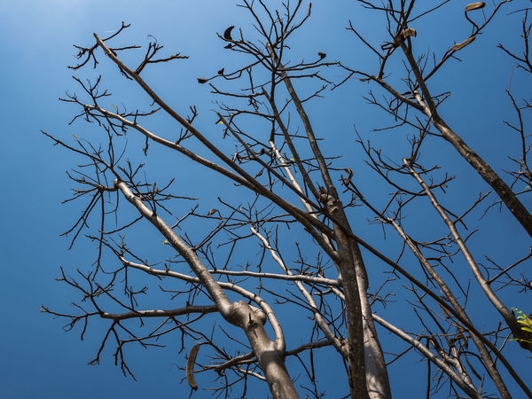 Animal Themes Animal Wildlife Animals In The Wild Bare Tree Beauty In Nature Bird Bird Of Prey Blue Branch Clear Sky Day Low Angle View Mammal Nature No People One Animal Outdoors Perching Sky Sunlight Tree