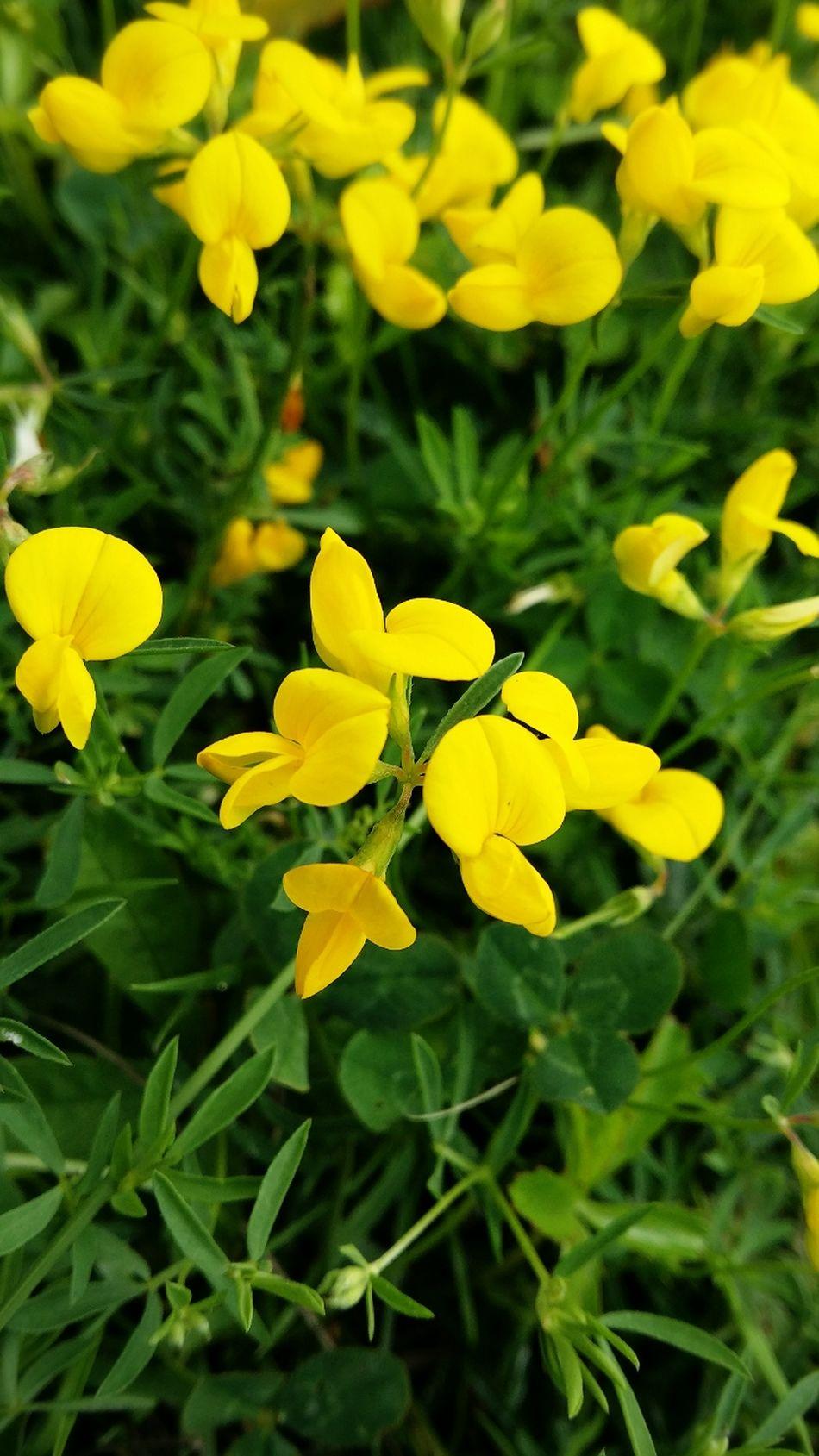 Flowers Nature Hippy Botanical