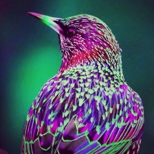 красива птица