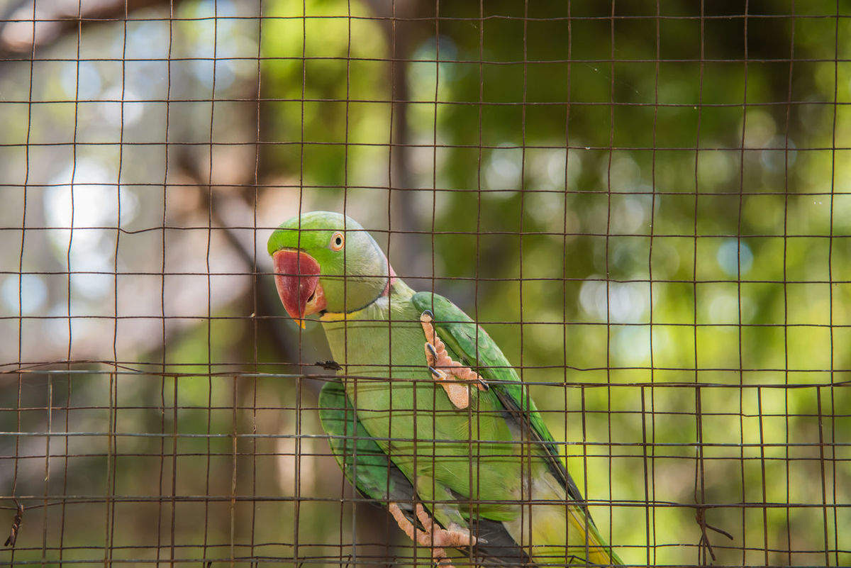 Animal Animal Themes Animals In Captivity Bird Cage Cute Animals Parrot Pets
