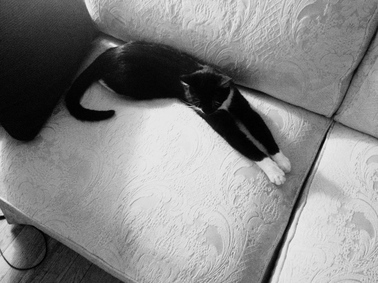 Light And Shadow Cat Blackandwhite