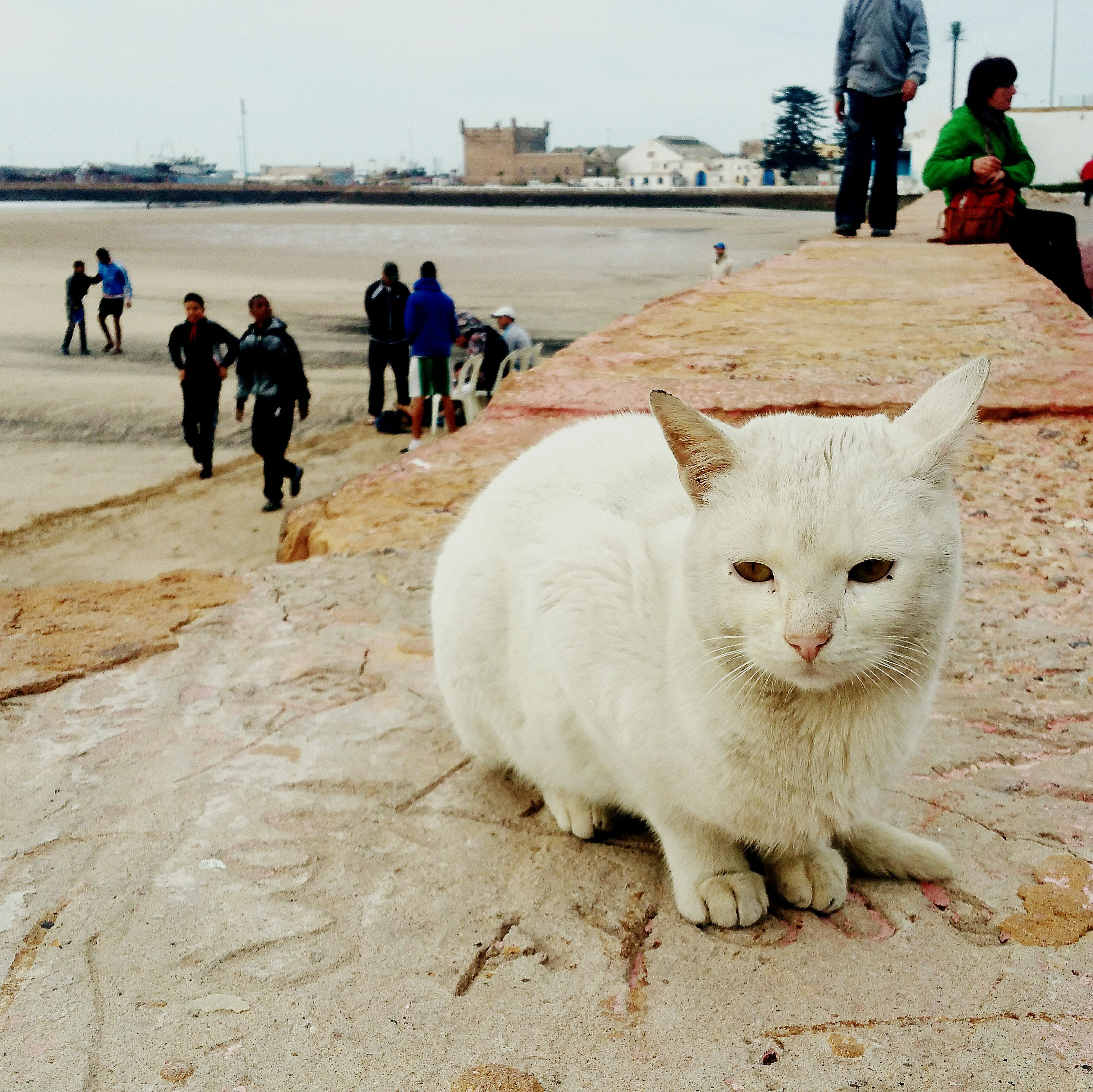 animal themes, walking, domestic animals, street, mammal, men, pets, built structure, architecture, incidental people, building exterior, full length, day, person, lifestyles, one animal, outdoors, city, rear view