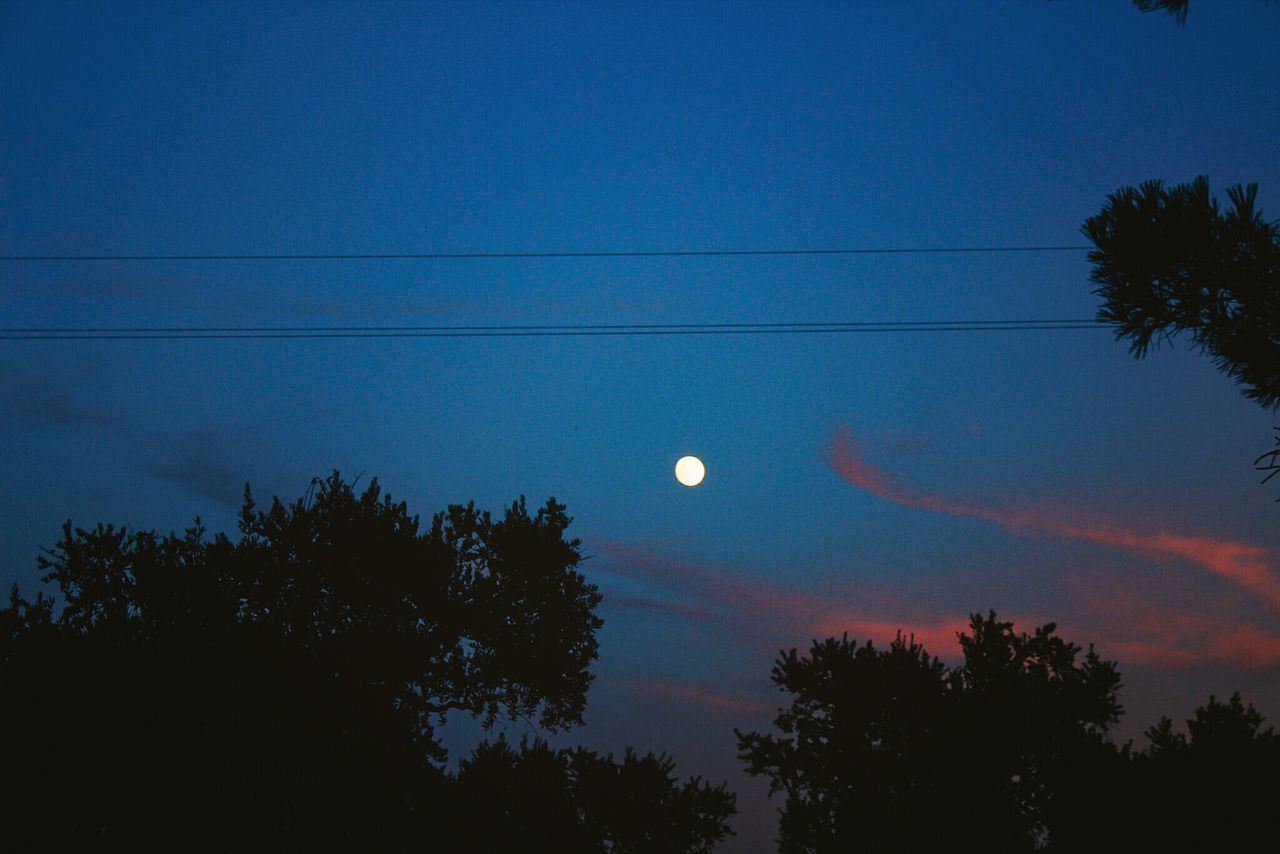moon, tree, nature, beauty in nature, silhouette, scenics, sky, astronomy, half moon, tranquility, tranquil scene, crescent, low angle view, night, outdoors, blue, no people, sunset, space