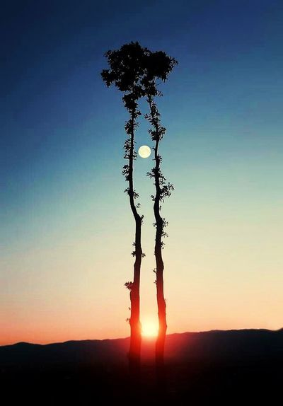 Tree Sunset Silhouette Beauty In Nature Nature No People Outdoors Sky Landscape Scenics my photo Day