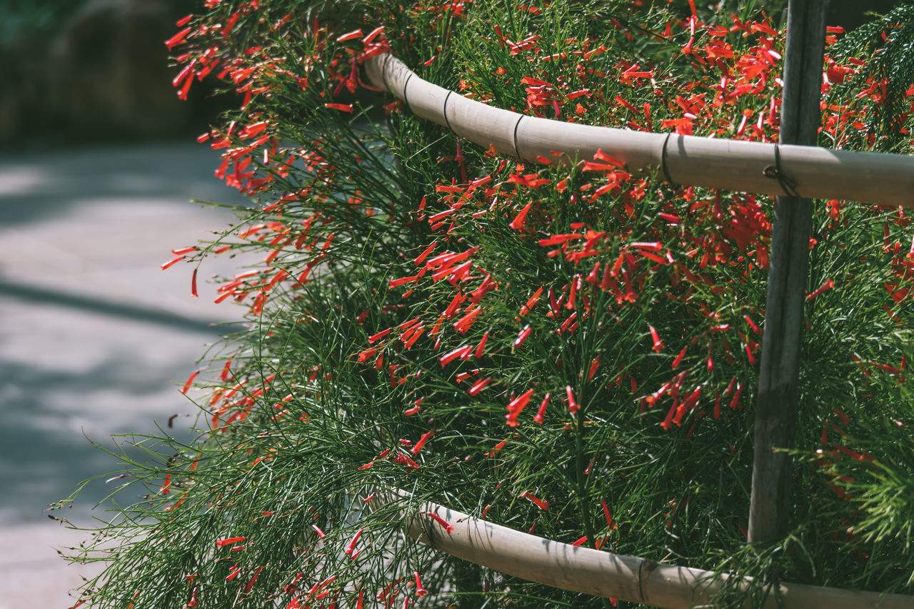 Autumn Beauty In Nature Branch Close-up Day Fire-cracker Vine Flame Flower Flower Grass Growth Leaf Nature No People Orange Trumpet Flowers Outdoors Plant Tree Water